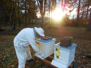 secret lives of beekeepers image
